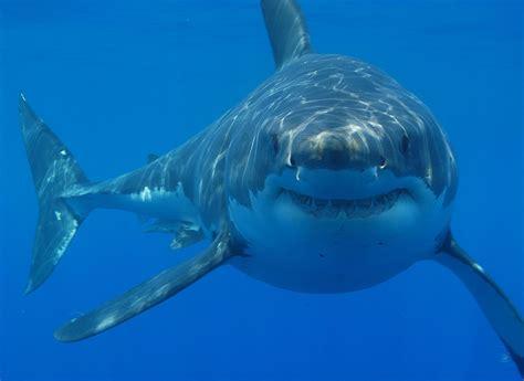 Animales marinos   Blogodisea