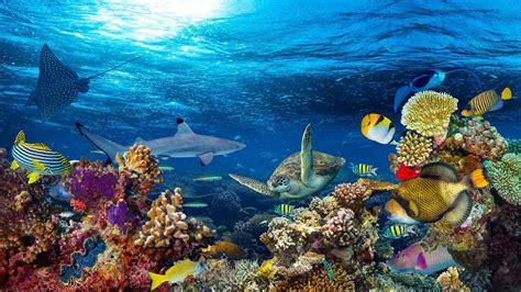 Animales marinos: características, clasificación y modo de ...