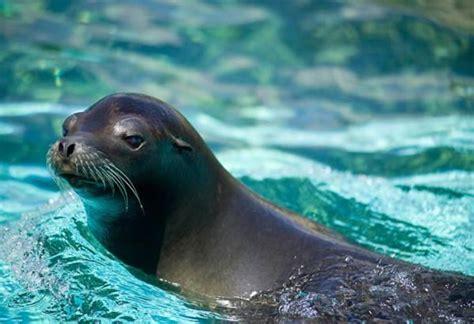 Animales marinos de Baja California