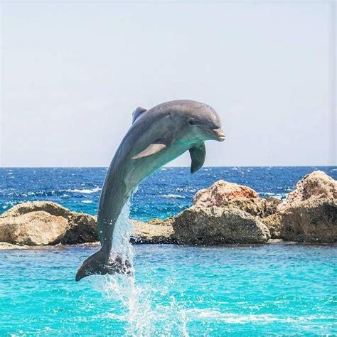 Animales marinos   Ejemplos y curiosidades