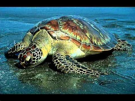 animales marinos en peligro de extincion en mexico