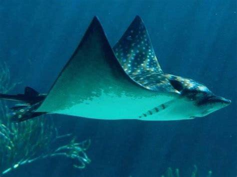ANIMALES MARINOS: Hermosos animales del reino marino