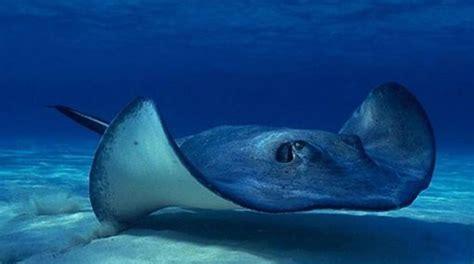 animales marinos     La Mar   Animales bajo el agua, Fotos ...