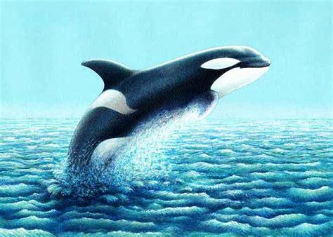 animales marinos: las orcas
