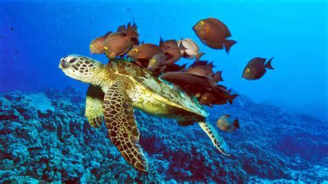 ANIMALES MARINOS: Los 5 animales marinos mas extraños