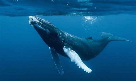 animales marinos más grandes del mundo y sus características