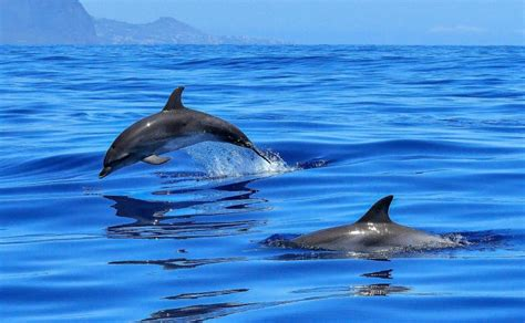 Animales marinos | Qué son, clasificación, alimentación ...