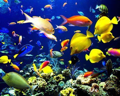 Animales marinos: ¿QUÉ SON LOS ANIMALES MARINOS ...