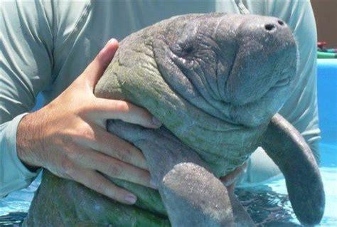 Animales marinos  Qué son, tipos y características ...