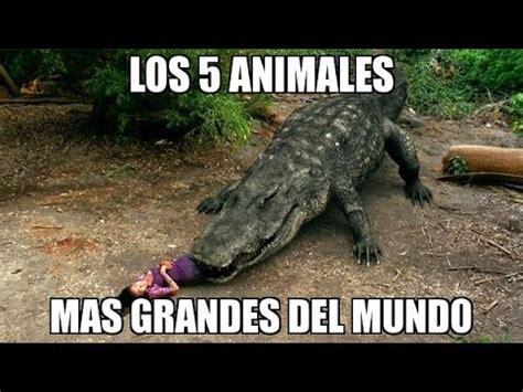 Animales Mas Grandes del Mundo   YouTube