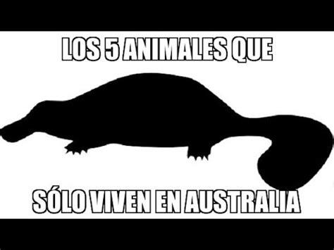 Animales Que Solo Viven En Australia   YouTube