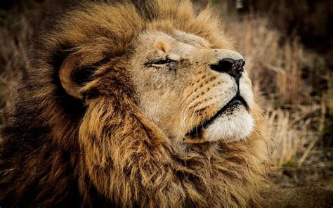 Animales salvajes, CITES y leones