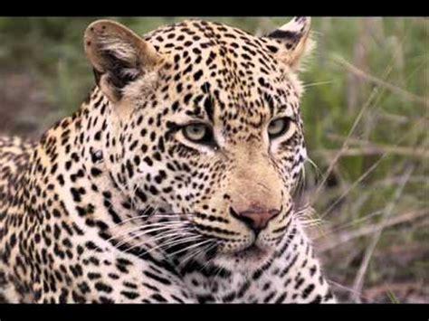 Animales Salvajes de La Selva   YouTube