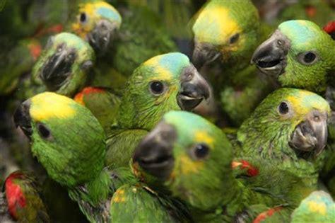 Animales salvajes que habitan la selva venezolana