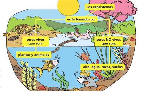 Animales Terrestres Y Acuaticos Para Niños De Primaria ...