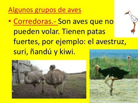 Animales vertebrados 2013