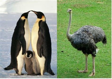 animales vertebrados: AVES.