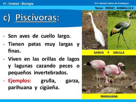 Animales vertebrados ii