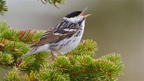 Animales: Volar o morir: el viaje de un pequeño pájaro a ...