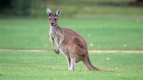 Animali d Australia   Aussie Specialist Program   Tourism ...