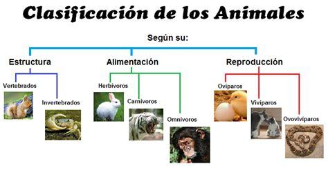 Animalia: Clasificación de los animales