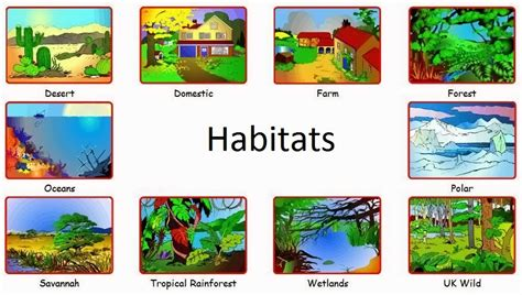 Animals and Habitats