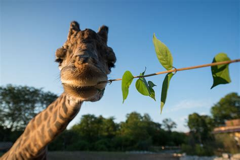 Animals at the Pittsburgh Zoo | Pittsburgh zoo, Animals ...