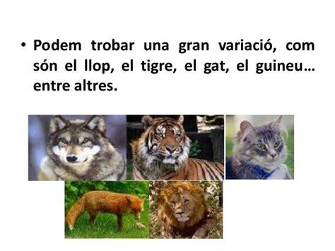 Animals carnívors