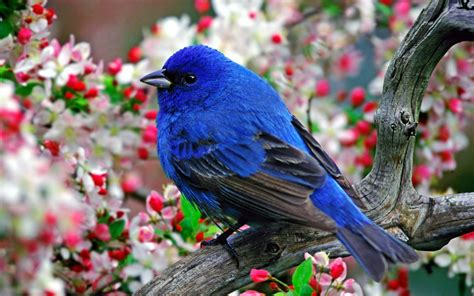 animals, Nature, Birds Wallpapers HD / Desktop and Mobile ...