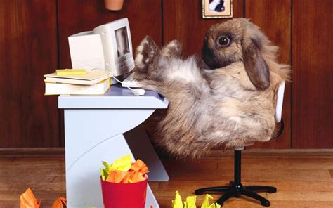 Animals rabbits tech computer funny office wallpaper ...