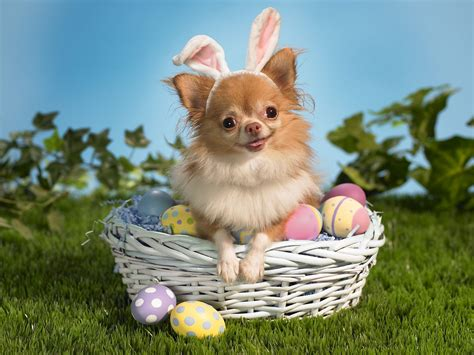 Animals Zoo Park: Happy Easter Animals Pics, Funny Easter ...