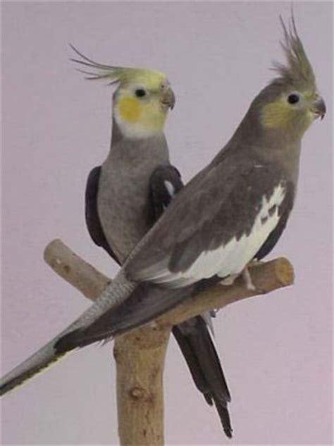 animaniamadrid venta de Animales aves disponibles