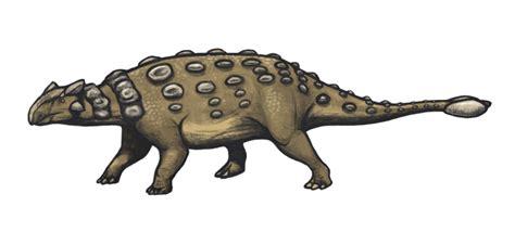 Ankylosaurus magniventris   Wikipedia, la enciclopedia libre