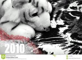 Año del tigre blanco foto de archivo. Imagen de negro ...