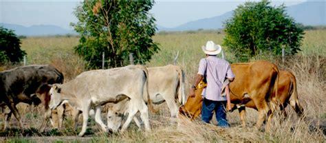 Antecedentes de la ganadería en el Estado de Jalisco   BM ...