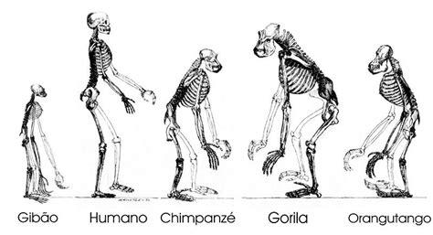 Antes y después de la teoría de la evolución de Charles ...