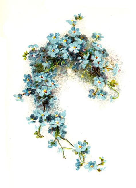 Antique Images: Free Flower Clip Art: Blue Forget Me Not ...