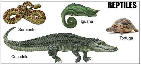 Apa itu Reptil