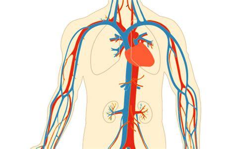 Aparato Circulatorio   Carpetapedagogica.com
