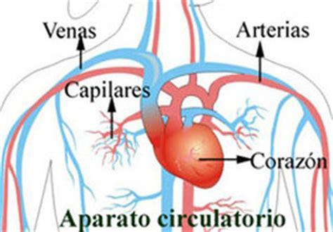 Aparato circulatorio   Ideología Biología