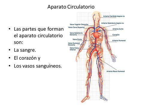 Aparato Circulatorio Para que el cuerpo se mantenga con ...