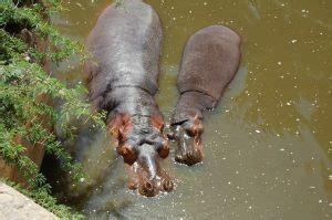 Aparcar gratis cerca del Zoo de Barcelona | ShBarcelona ...