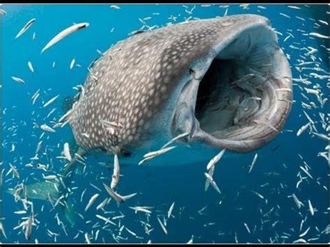 """Apareció el """"monstruo de los mares"""" en la India   Info ..."""