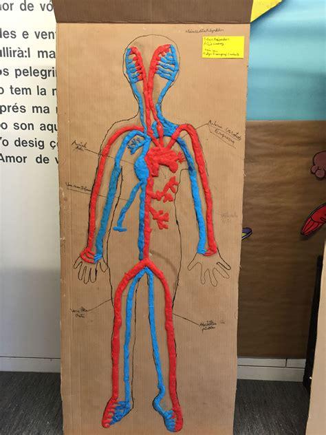 Aparell circulatori a l escola | Ciencias | Maqueta cuerpo ...