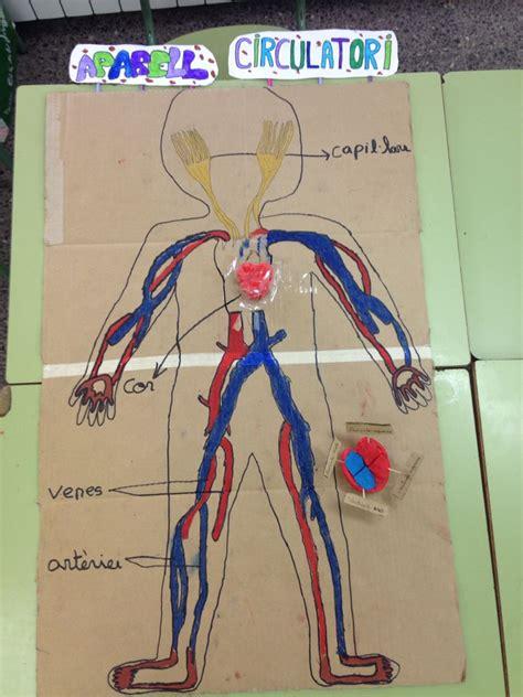 Aparell Circulatori Aparato Circulatorio Made for children ...