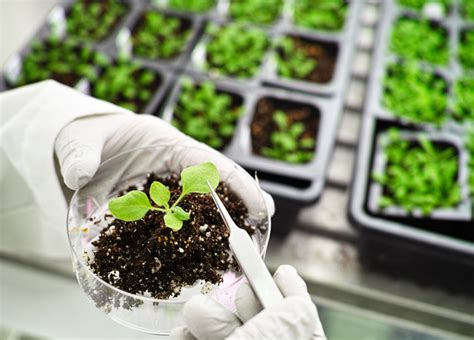 APEC Seeks Efficient Biotech Framework for Regional Food ...