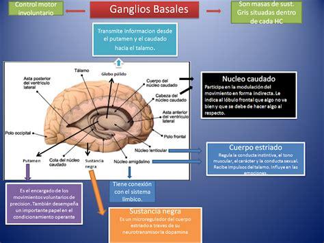 Aplica la Psicología a tu vida: Ganglios basales