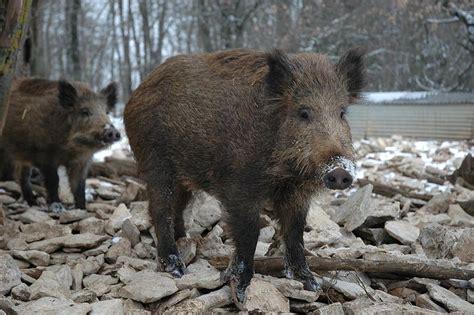 Apoio a Ciências Naturais: Como se alimentam os animais?