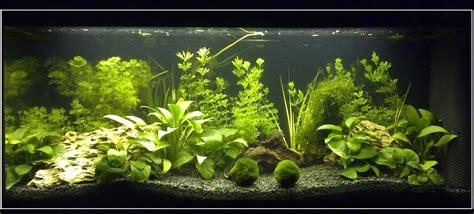 Aprende a elegir las plantas adecuadas para tu acuario ...