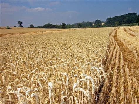 Aprende todo sobre la Agricultura de Secano